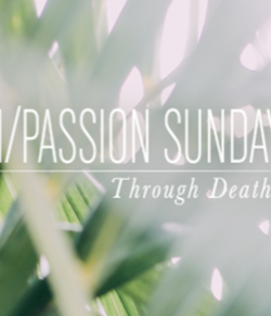 palm passion sunday 1